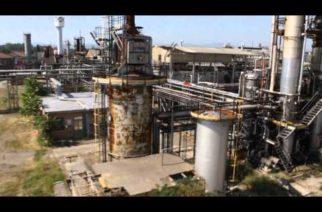 Canapa per risanare terreni inquinati