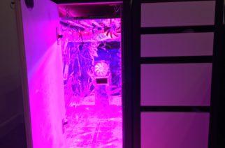 growbox cassettiera ikea