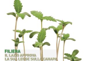 La copertina del numero 2 di Canapa Mag, una primavera molto verde.
