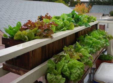 Orto in balcone: i sette ortaggi più produttivi