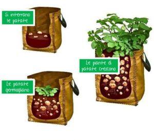 Coltivare patate in balcone