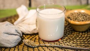 Latte di canapa preparazione hemp fu ricotta semi di canapa