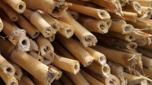 Bioedilizia - il bambù e le sue caratteristiche