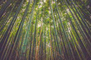 Bioedilizia: il bambù, l'acciaio verde