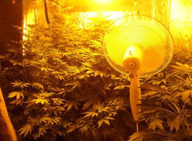 BeLeaf - Cannabis Mag - Coltivazione