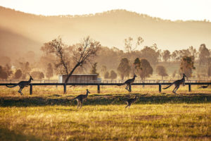La Canapa in Australia - Hunter Valley, Australia