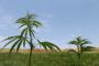 In Pennsylvania aumenta la coltivazione di canapa industriale