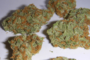 La Legalizzazione della Cannabis riduce il numero di morti per oppiacei