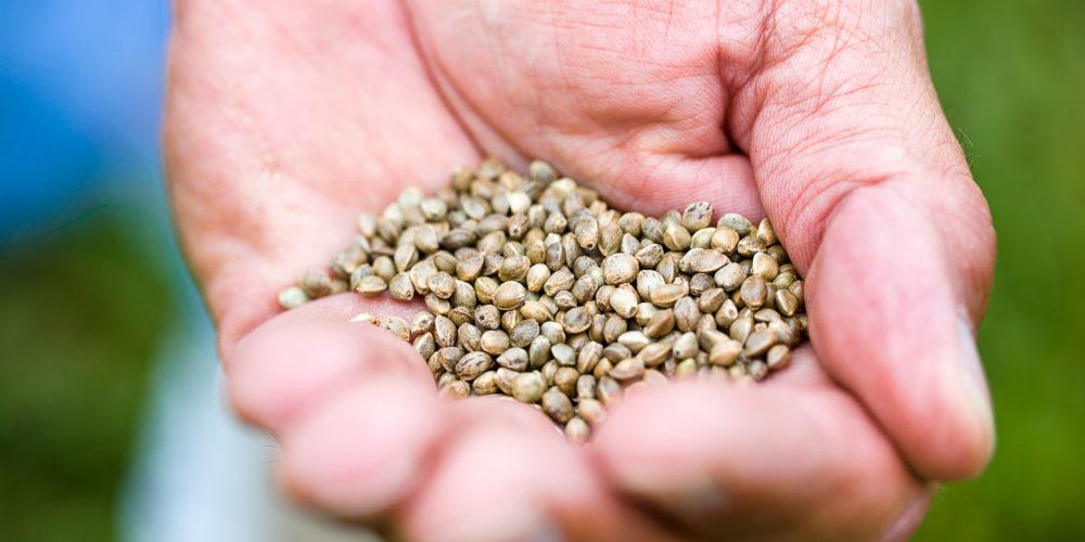 come si mangiano i semi di chia per perdere peso