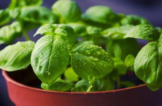 Coltivare piante aromatiche in balcone