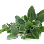 Piante aromatiche - Salvia