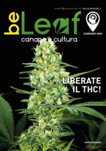 Cannabis num 8