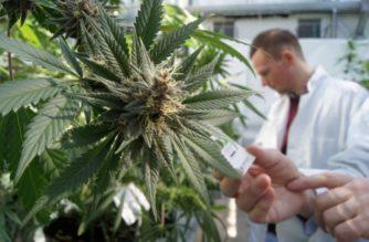 Epilessia e Cannabis