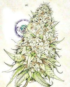 Cannabis light, facciamo chiarezza