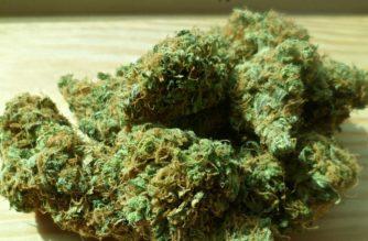 Comunicazione e pubblicità in materia di cannabis