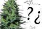 Quale combinazione di cannabinoidi è più efficace a livello terapeutico?