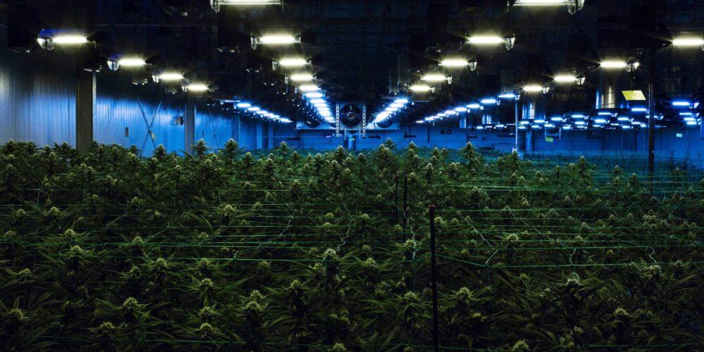 Il New jersey dice sì alla legalizzazione