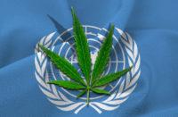 Voto Onu sulla riclassificazione cannabis